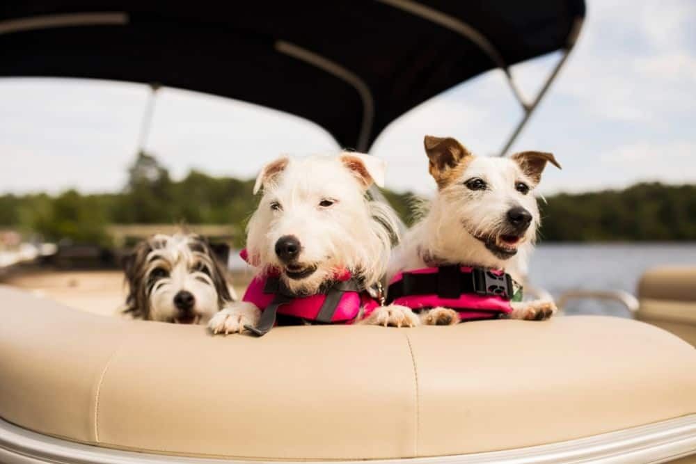 Bring the dogs on an inflatable boat